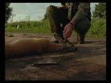 ОХОТА Hunters Video 1013 Охота скрадом на европейскую косулю
